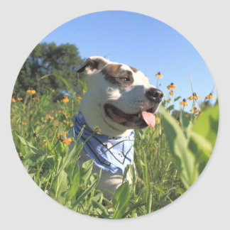 Pitbull-Knochen-Frühling Runder Aufkleber