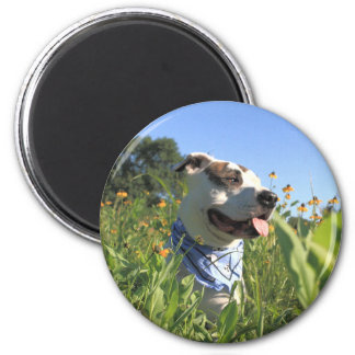 Pitbull-Knochen-Frühling Runder Magnet 5,7 Cm