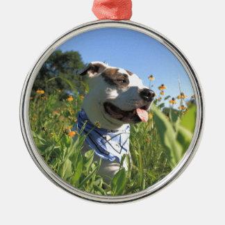 Pitbull-Knochen-Frühling Rundes Silberfarbenes Ornament