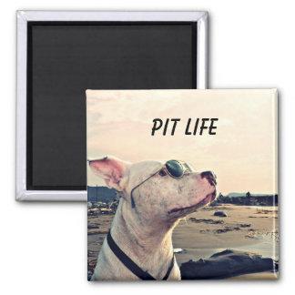 Pitbull-Leben-Magnet Quadratischer Magnet