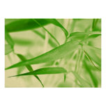 Plakat Kunstdruck Fineartprint   Bambus