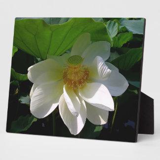 Plakette mit empfindlicher weißer Lotos-Blume Fotoplatte