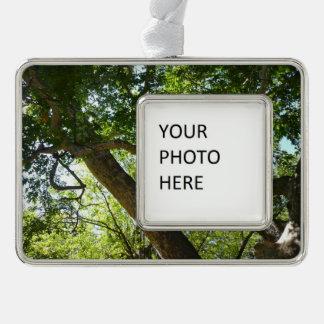 Platane-Baum-Grün-Natur-Fotografie Rahmen-Ornament Silber