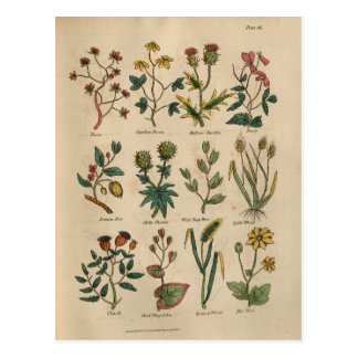 Platte der Pflanzen Postkarte