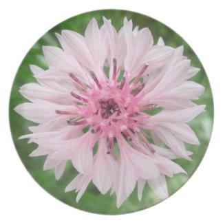Platte - Rosa/der Knopf des rosa Junggesellen Teller