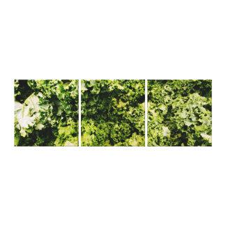 Platten-Leinwand des Kohl-3 Leinwanddruck