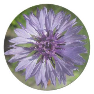 Platten-- lila/lila des Junggesellen Knopf Teller
