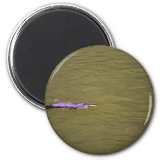 PLATYPUS EUNGELLA NATIONALPARK AUSTRALIEN RUNDER MAGNET 5,1 CM