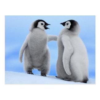 Plaudernde Pinguine - Postkarte