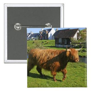 Plockton, Schottland. Haarigen Coooos (Kühe) Hande Quadratischer Button 5,1 Cm
