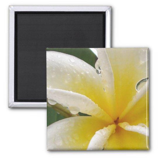 Plumeria gelb quadratischer magnet