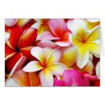 Plumeriafrangipani-Hawaii-Blumen-Hawaiianer-Blumen Karten