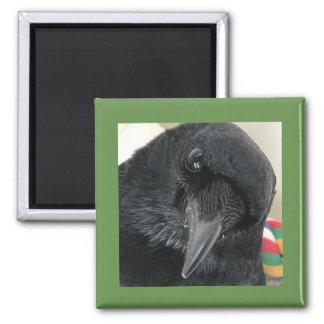 Poe der Krähen-Magnet mit grüner Grenze Quadratischer Magnet