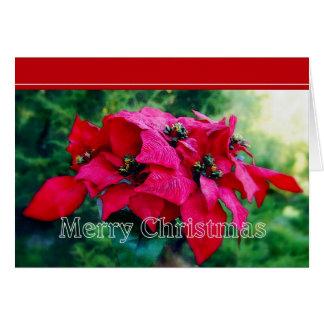 Poinsettia-frohe Weihnacht-Karte Karte