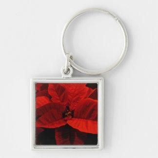 Poinsettia Schlüsselanhänger