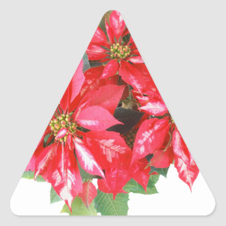 Poinsettia-Weihnachtsstern transparentes png Dreieckiger Aufkleber