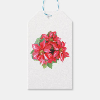 Poinsettia-Weihnachtsstern transparentes png Geschenkanhänger