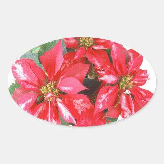 Poinsettia-Weihnachtsstern transparentes png Ovaler Aufkleber
