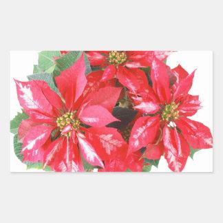 Poinsettia-Weihnachtsstern transparentes png Rechteckiger Aufkleber