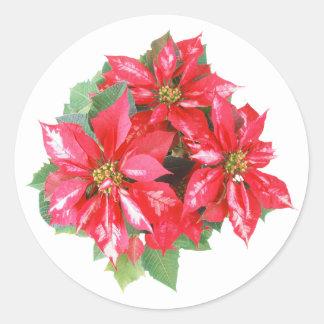 Poinsettia-Weihnachtsstern transparentes png Runder Aufkleber