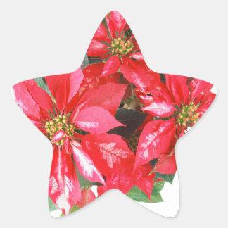 Poinsettia-Weihnachtsstern transparentes png Stern-Aufkleber