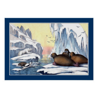 Polare Bären, Walroß und Siegel Poster