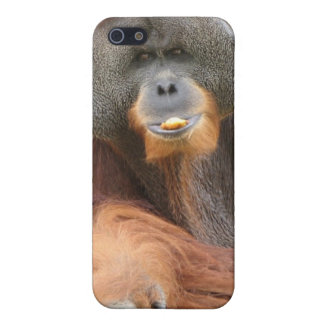 Pongo-Affe iPhone Fall Schutzhülle Fürs iPhone 5
