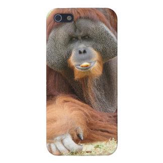 Pongo-Orang-Utan Affe iPhone 5 Hüllen