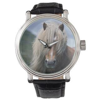 Pony Großbritanniens, Schottland, Shetland-Inseln, Armbanduhr