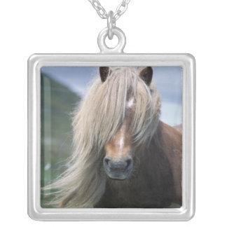 Pony Großbritanniens, Schottland, Shetland-Inseln, Versilberte Kette