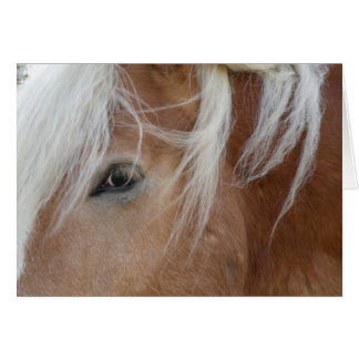 Pony notecard karte
