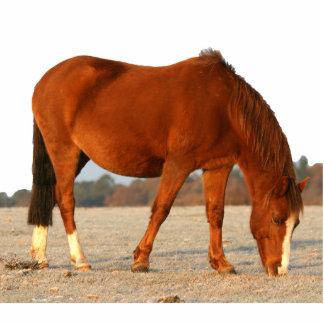 Pony photosculpture freistehende fotoskulptur