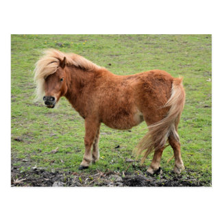 Ponypostkarte Postkarte