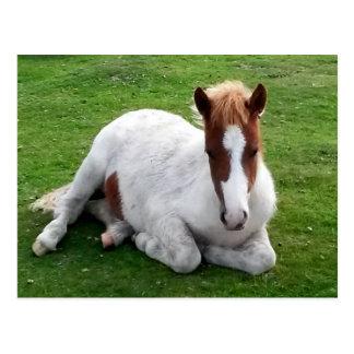 Ponys auf Bodmin machen Cornwall England fest Postkarte