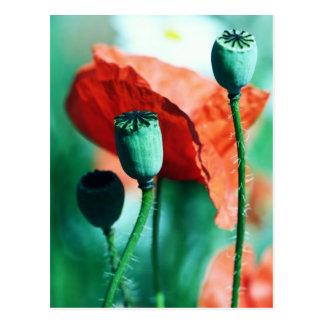 Poppy Postkarte
