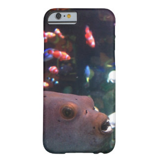 Porcupinefish-Telefon-Kasten Barely There iPhone 6 Hülle