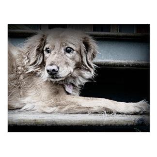Portal-Hund auf Schritten mit traurigen Augen Postkarte