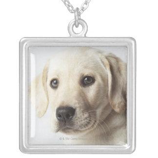 Porträt blonden Labrador retriever-Welpen Versilberte Kette