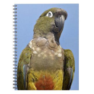 Porträt, das Papageien gräbt Spiral Notizblock