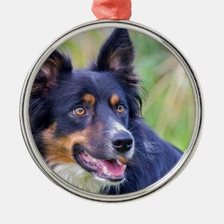 Porträt der farbigen Border-Collie dog.JPG Silbernes Ornament