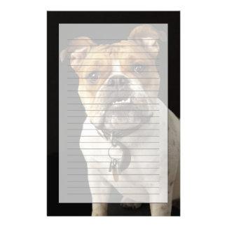 Porträt der tan und weißen Bulldogge mit Kragen Druckpapiere
