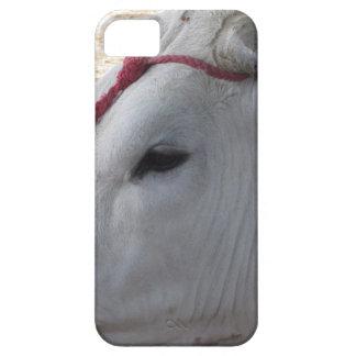 Porträt des Chianina, italienische Zucht des Viehs iPhone 5 Hülle