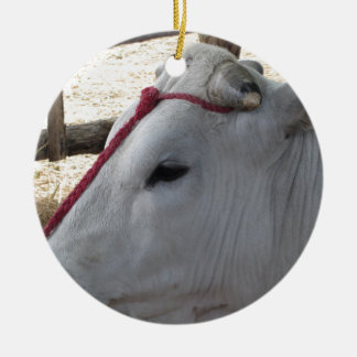 Porträt des Chianina, italienische Zucht des Viehs Rundes Keramik Ornament