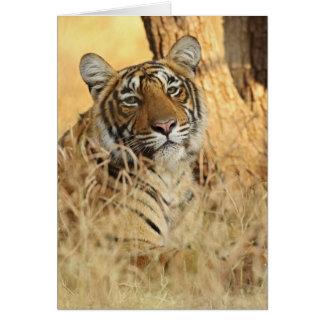 Porträt des königlichen bengalischen Tigers, Karte