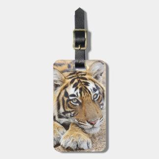 Porträt des königlichen bengalischen Tigers, Kofferanhängern