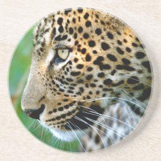 Porträt des Leoparden (Panthera Pardus) Getränkeuntersetzer