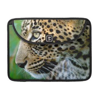 Porträt des Leoparden (Panthera Pardus) Sleeves Für MacBook Pro