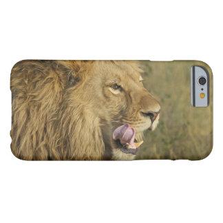 Porträt des Löwe-Mannes seinen Mund leckend Barely There iPhone 6 Hülle