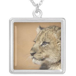 Porträt des Löwejungen (Panthera Löwe), Namibia Versilberte Kette