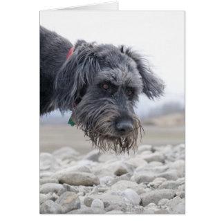 Porträt des Mischungszuchthundes, lehnend über Karte